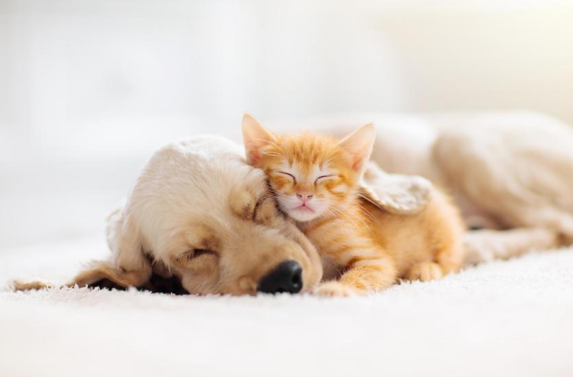 Какие самые распространенные болезни домашних животных?