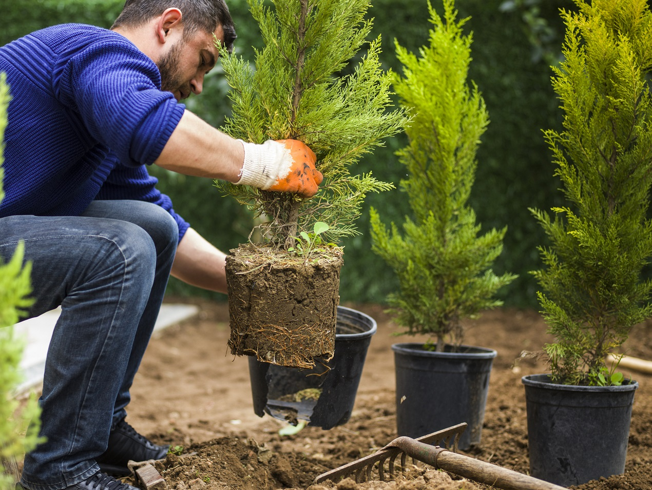 Безопасная покупка хвойных деревьев в Интернете - как убедиться в магазине?