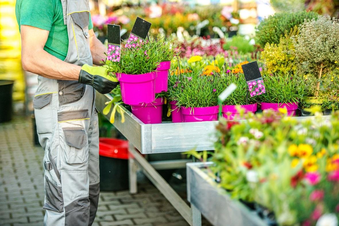 Как выбрать декоративные растения и ухаживать за ними?